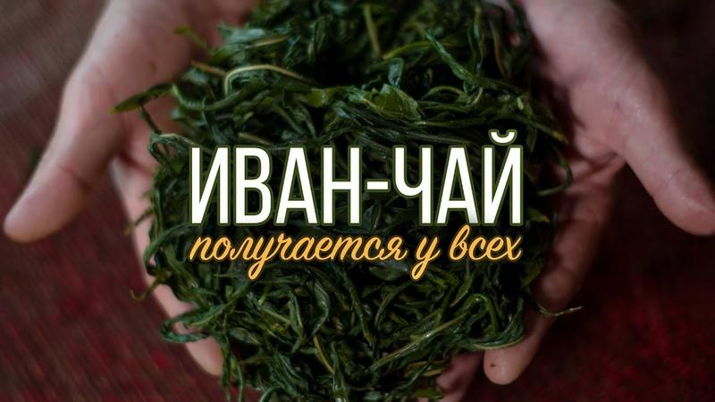 Иван чай Как сделать вкусный полезный русский чай