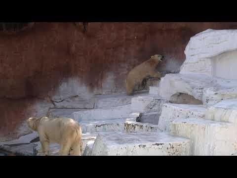 2 4 Aug 2021 Shilka and Hochan at Tennoji zoo Osaka Japan