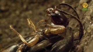 Макромиры - Зима наступает. Где зимуют насекомые. Документальный фильм в FullHD 1080p