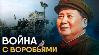 Китай против воробьев - самый страшный голод XX века.