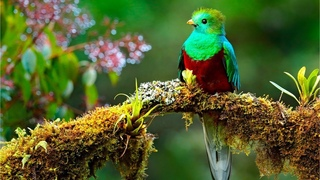 Beautiful Relaxing Music, Peaceful Soothing Instrumental Music, Tropical Birds By Tim Janis