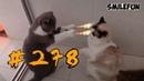 КОШКИ 2019 ПРИКОЛЫ С КОТАМИ Смешные котики и коты 2019 Funny Cats
