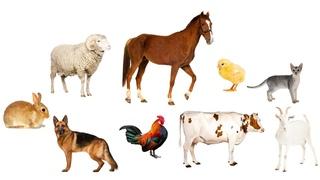 Учим Животных по Системе Монтессори🐓🐎Развивающие Мультики для Детей