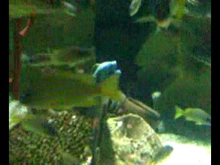океанариум 2014 крабы