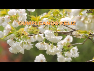 CUMPLEAÑOS FELIZ - KARAOKE | Luis Cruz