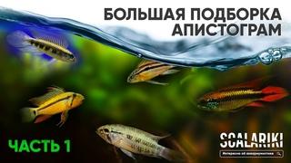 Апистограммы - Самые красивые аквариумные рыбки. Содержание. Виды. Биотопы