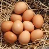 Яйца кур