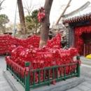 Shang Zheng   Beijing   45