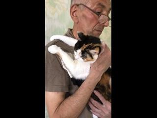 Видео от Дневник приюта для кошек