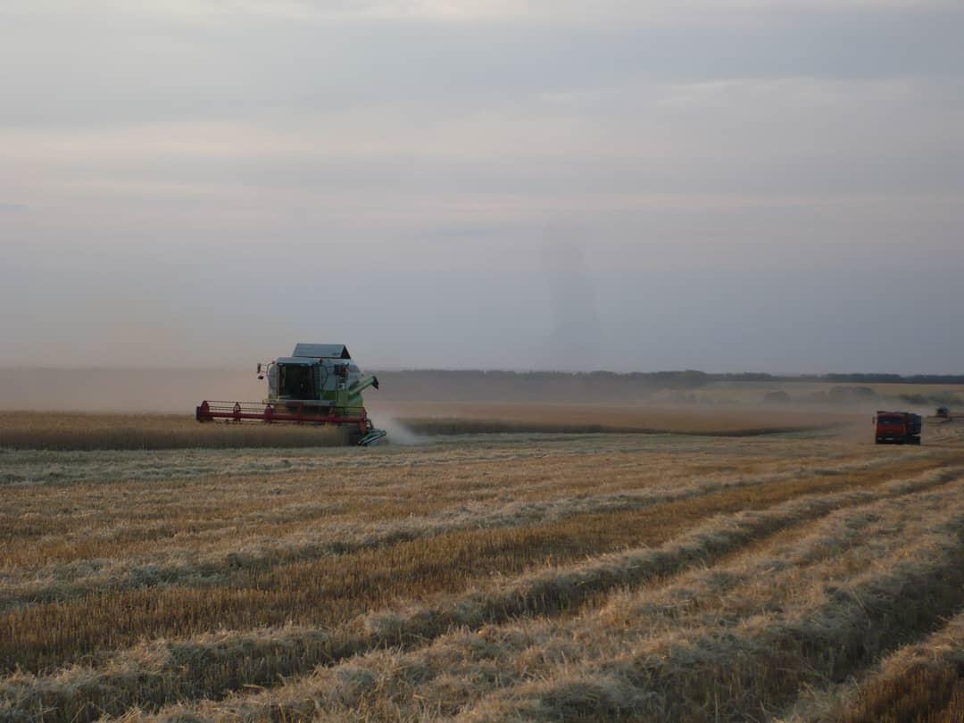 В Петровском районе зерновые и зернобобовые культуры в аграрных хозяйствах убраны на площади 46 876 гектаров