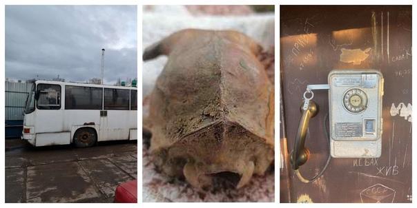 «Икарус», череп инопланетянина и телефонная будка:...