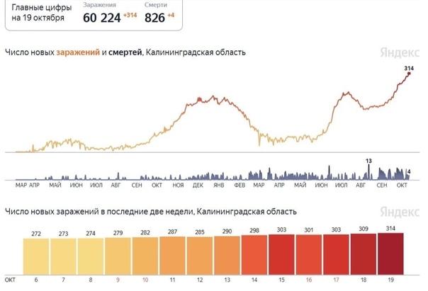 В Калининградской области новый коронавирусный ант...