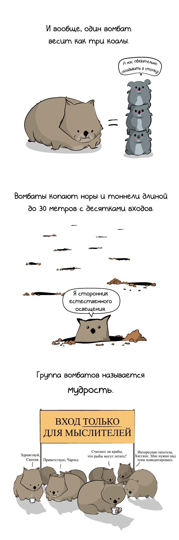 Вомбаты