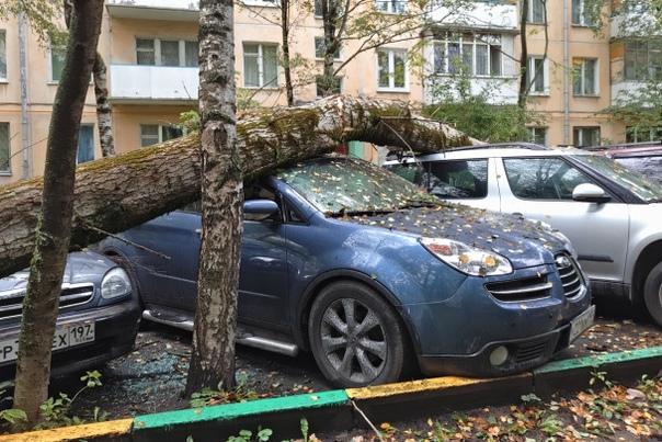 Упавшее на легковушку дерево под Выборгом отправил...