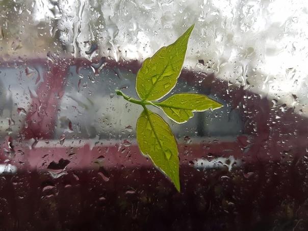 В Татарстане прогнозируют сильные дожди в ближайши...