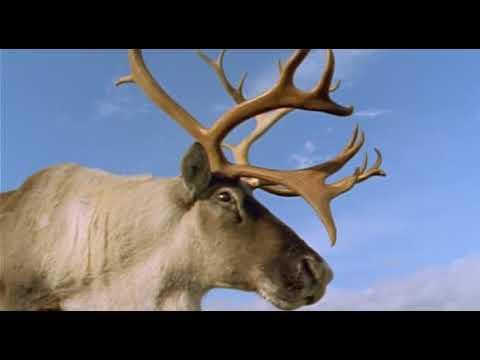 BBC Ребятам о зверятах Серия про оленей