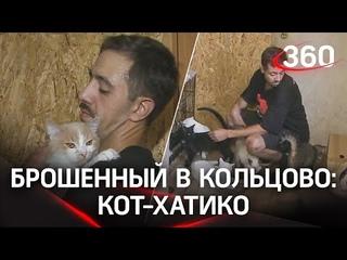Вышвырнула кота из переноски и улетела в Москву. Прокуратура проверяет случай в аэропорту Кольцово