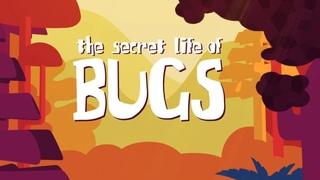 Тайная жизнь жуков | Короткометражный мультфильм для детей