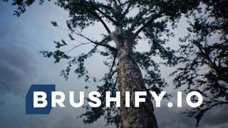 Brushify - Creating Photorealistic Trees For UE4